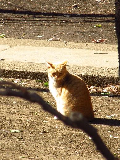 ネコの日.jpg