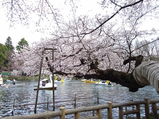 井の頭公園3.jpg