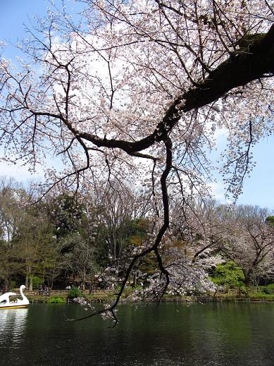 井の頭公園4.jpg