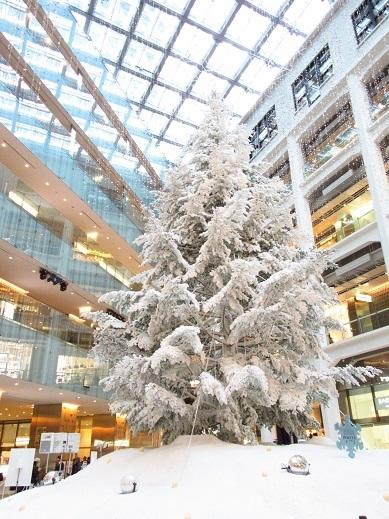 tree2jpg.jpg