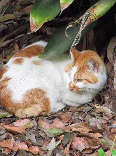 ネコとカラス4.jpg