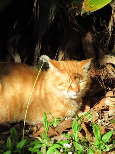 ネコとカラス5.jpg