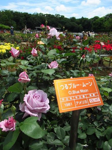 神代植物園11.jpg