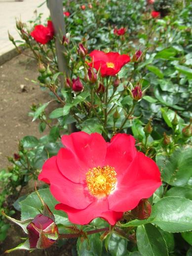 神代植物園13.jpg