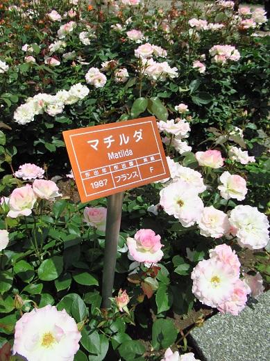 神代植物園14.jpg