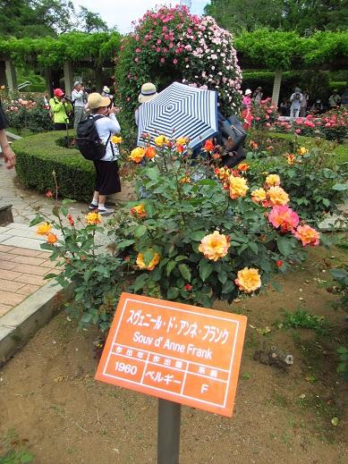 神代植物園6.jpg