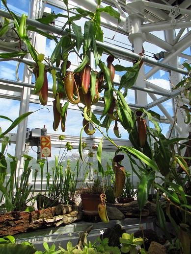 食虫植物.jpg